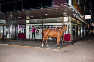 (untitled) Horse201475x50cmInkjet print, Framed