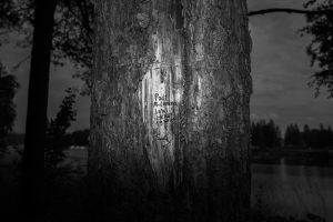 (untitled) Tree Writing201430x20cmInkjet print, Framed